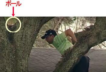 木の上ボール