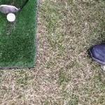 ボール踏んで飛距離アップPart2!準備に1秒。ゴルフ上達法